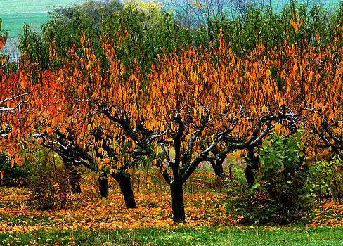 Fire in the Orchard by L Granville Laird