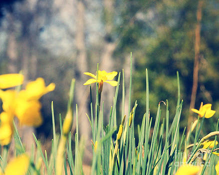First Hint of Spring by Beth Engel