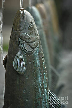 Fish Up by David Taylor