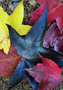 Five Fall Leaves by Sandi OReilly