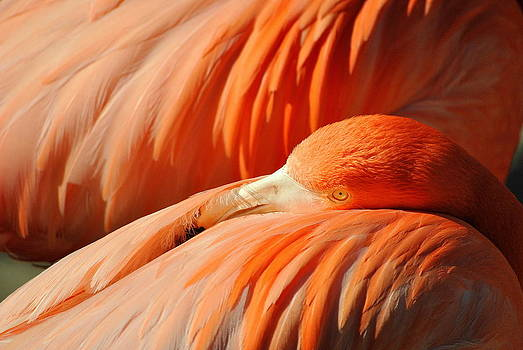 Flamingo At Rest by Eleu  Tabares