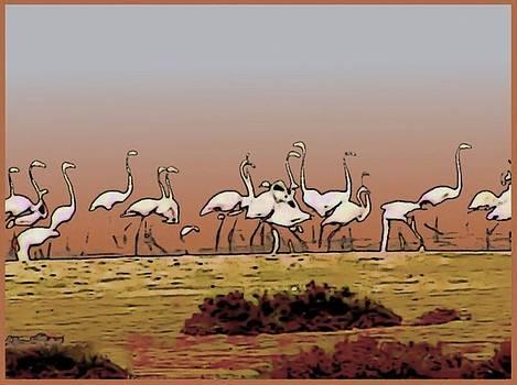 Flamingos by Rod Saavedra-Ferrere