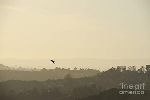 Flight in the evening sky by Darwin Lopez