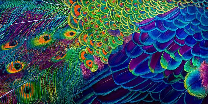 Flight of Fantasy by Lisa Rodriguez