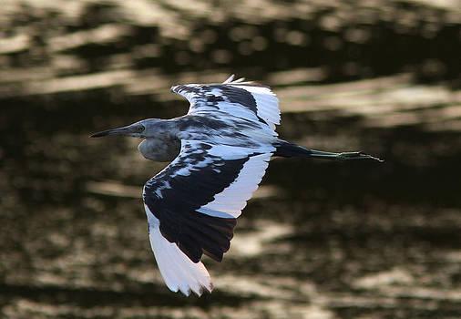 Flight of the Tweener by Phil Lanoue