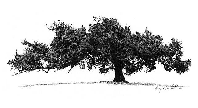 Flint Hills Tree by Gary Gackstatter