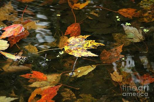 Floating Leaves by Theresa Willingham