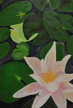 Floating Lotus 2 by Holly Donohoe