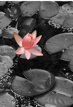 Shari Jardina - Floating Pink