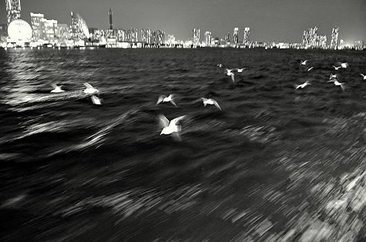 Dean Harte - Flock of Seagulls Abstract