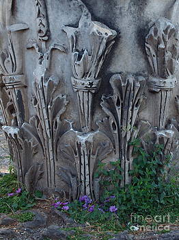 Flora Among the Ruins by Joyce Hutchinson