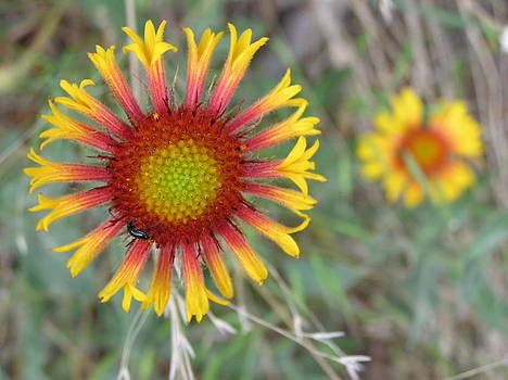 Floral art by John Myers