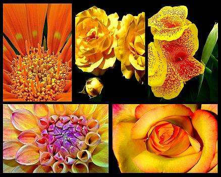 Floral Collage by Imagevixen Photography