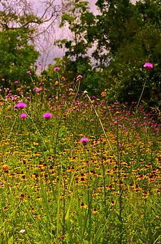 Frank SantAgata - Floral Enchantment