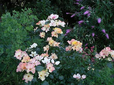 Floral Jungle by Monica Cranswick