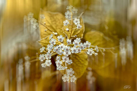 Floral Wonders by Bonnie Willis