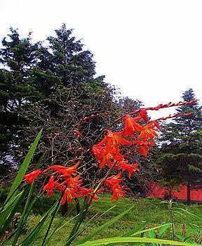 Flower 2 by Jayvardhan Kandpal