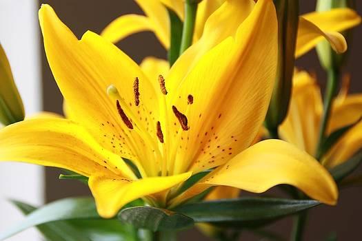 Flower by Amit Khanna