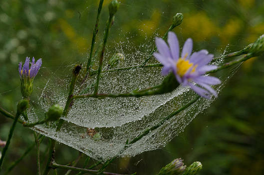 Flower And Web by Cheryl Cencich