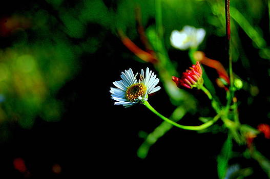 Flower by Blue Curtain