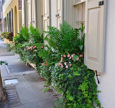 Flower Box Tradd Street 2 by Lori Kesten