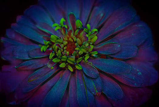 Cindy Boyd - Flower Close Up in Ultra Violet