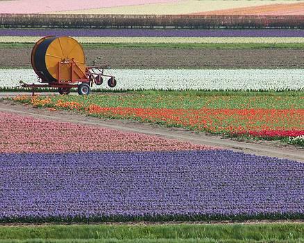 Flower Garden by Tia Anderson-Esguerra