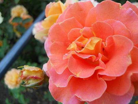 Flower by James McGuine
