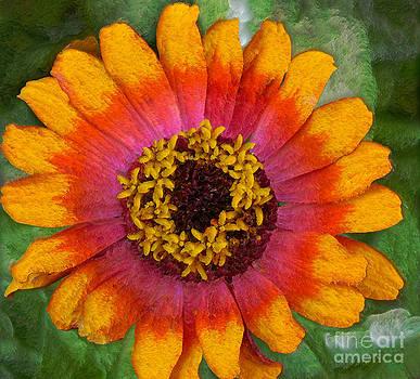 Flower by Jeff Breiman