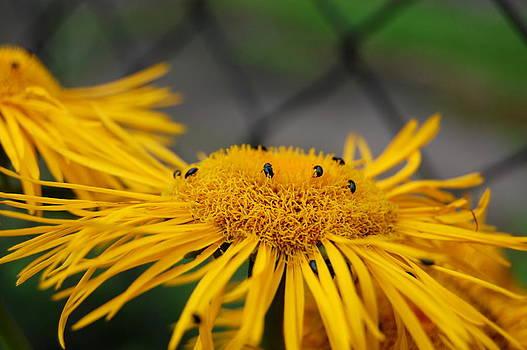 Flowers by Lenka Kendralova