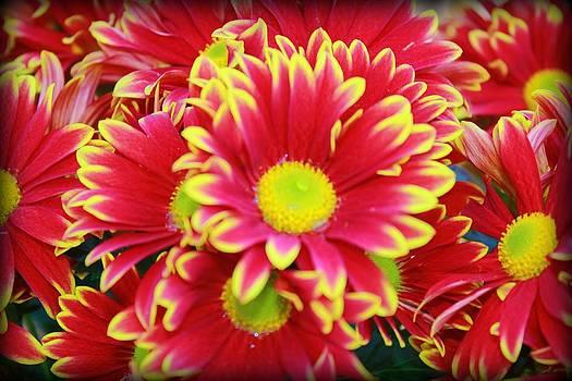 Flowers by Melissa Richter