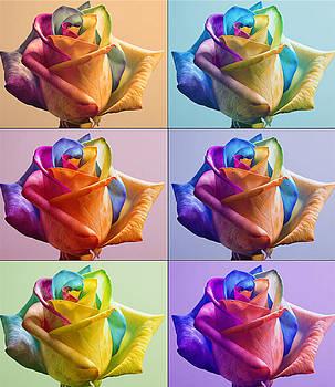 Flowers by Yosi Cupano