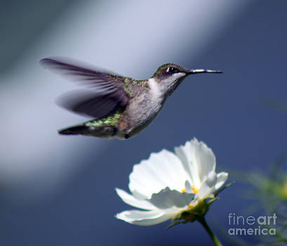 Cathy  Beharriell - Fly By