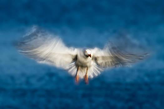 Flying in blue by Syssy Jaktman