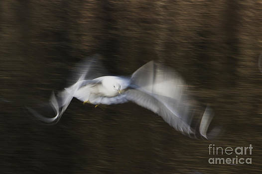 Flying with elegance by Syssy Jaktman