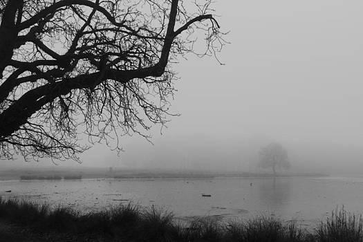 Fog in the Park by Maj Seda