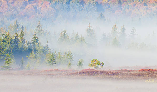 Fog in the Valley at Dolly Sods West Vriginia by Bill Swindaman