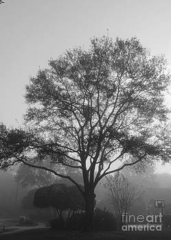 Foggy Morning Oak by Theresa Willingham