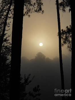 Foggy Summer Morning by Cindy Hudson
