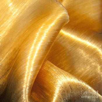 Artist and Photographer Laura Wrede - Folding Gold