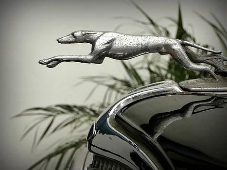 Karyn Robinson - Ford Greyhound Radiator Cap