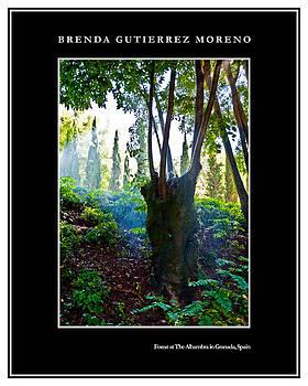 Forest at The Alhambra in Granada Spain black border by Brenda Gutierrez Moreno