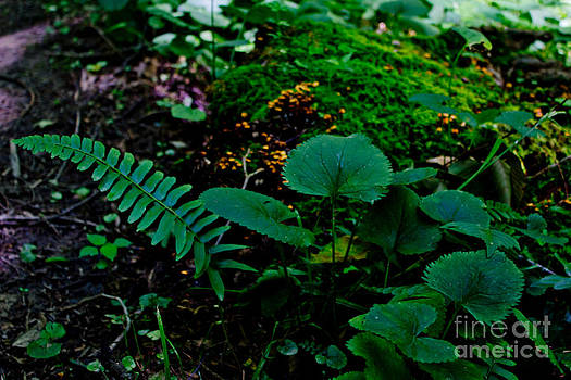 Forest Floor Flora by Tom Carriker