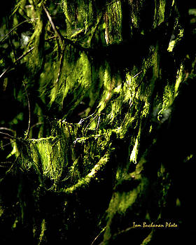 Forest Gloom by Tom Buchanan