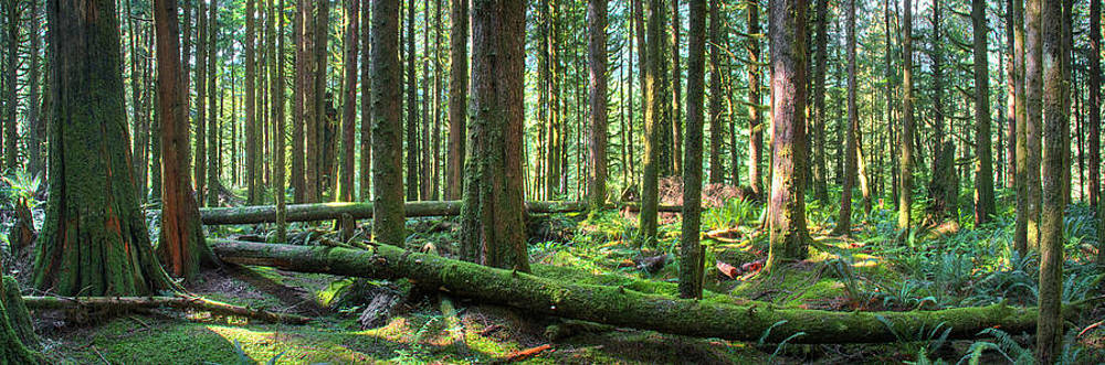 Forest Pano by Brandon Broderick