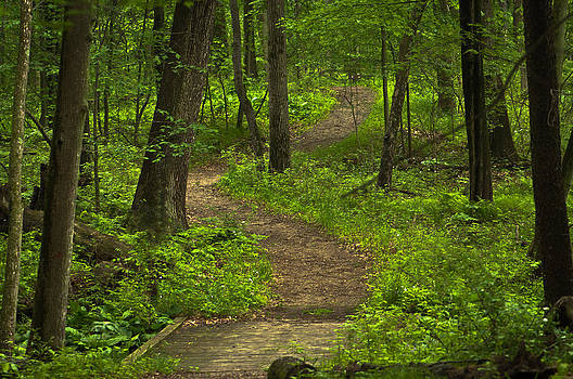 Forest Wake by Jason Naudi Photography