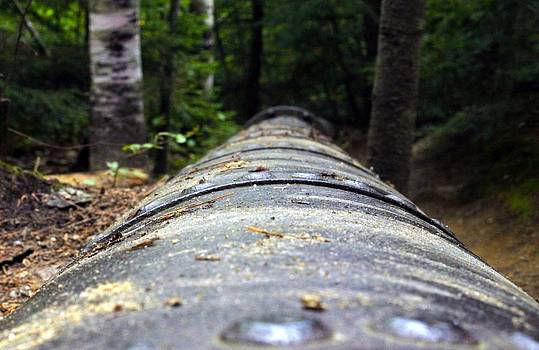 Forgotten Pipeline by Timothy Donahue