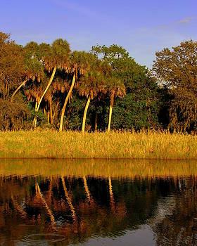 Four palms reflecting in Myakka Lake by John Myers