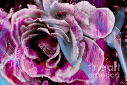 Frantic Intricacy  by Crystal June Norton