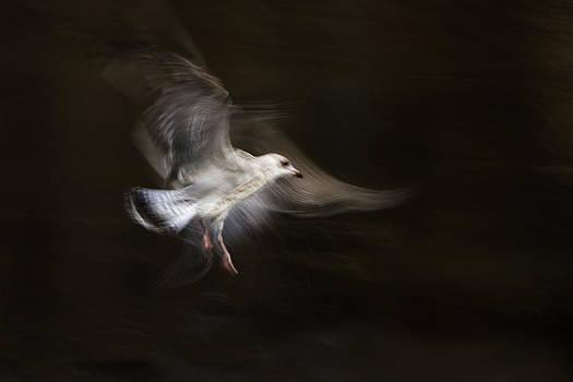 Freedom by Syssy Jaktman